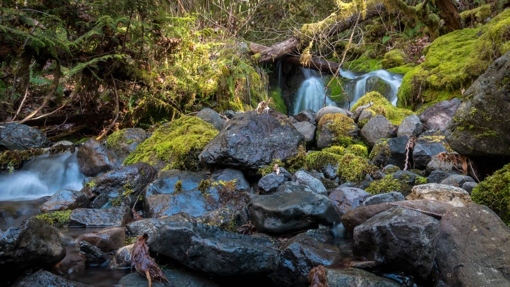 One of the many waterfalls of the Olympic Mountain Range. Photo Credit: Steve Weileman