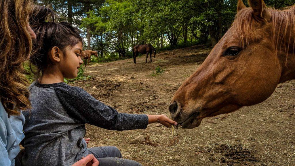 hand-feeding-horses