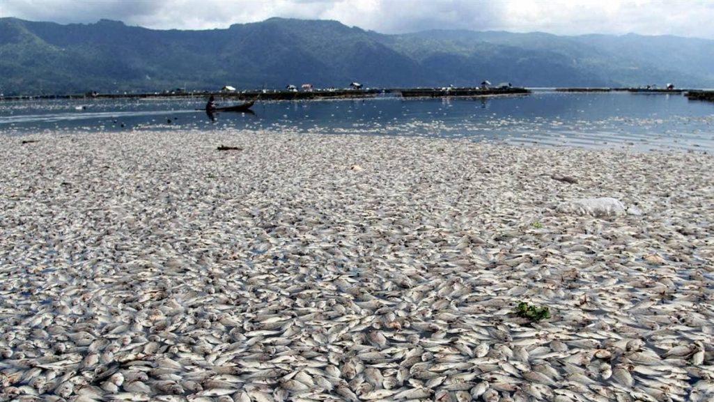 dead-sea-creatures