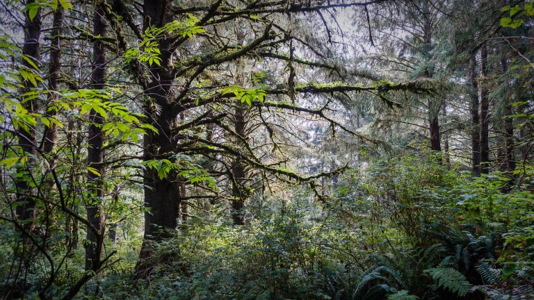 forest-view