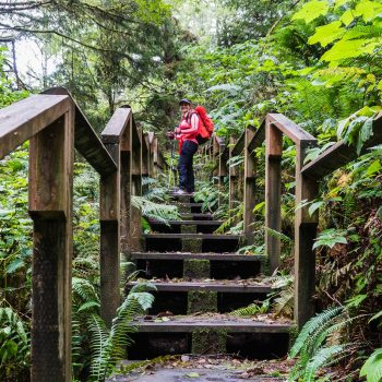 stairs-on-trail
