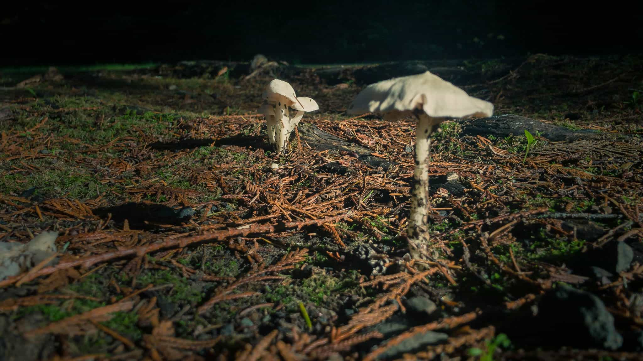 Mushrooms also thriving in the cold damp weather.