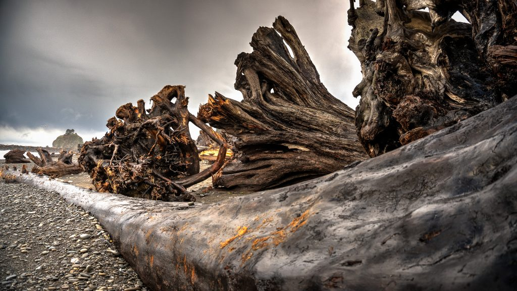 Some of the massive driftwood the recent storms coming in from the Pacific have pushed onto forest Beach.