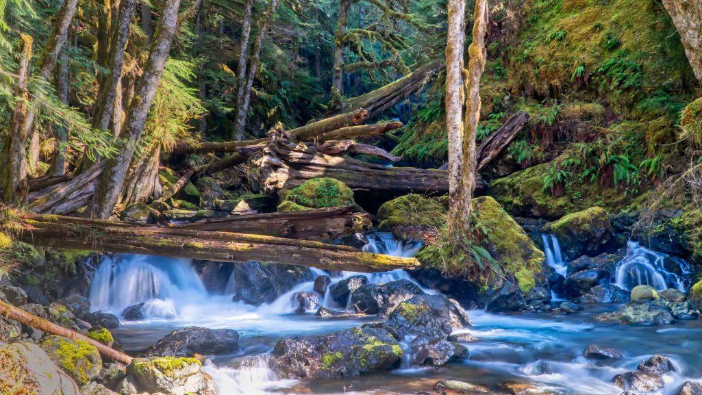 Hamma Hamma - Lower Lena Creek Falls