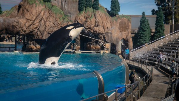 Is It Time To Forgive SeaWorld