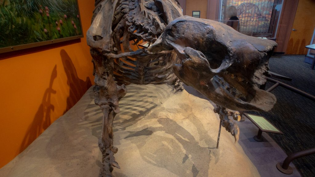 ground-sloth