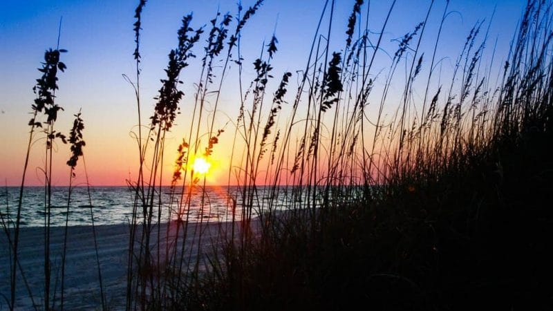 The Sugar White Sands of the Gulf of Mexico