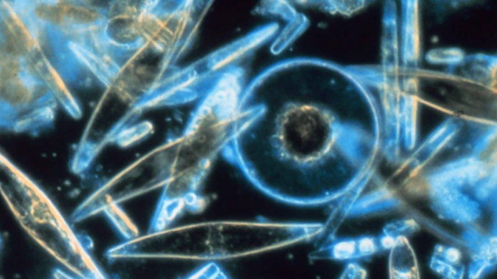 Phtoplankton-Hypoxia