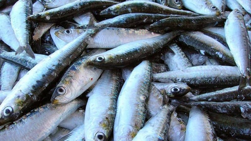 Sustainable Seafood Surging, but is it Enough